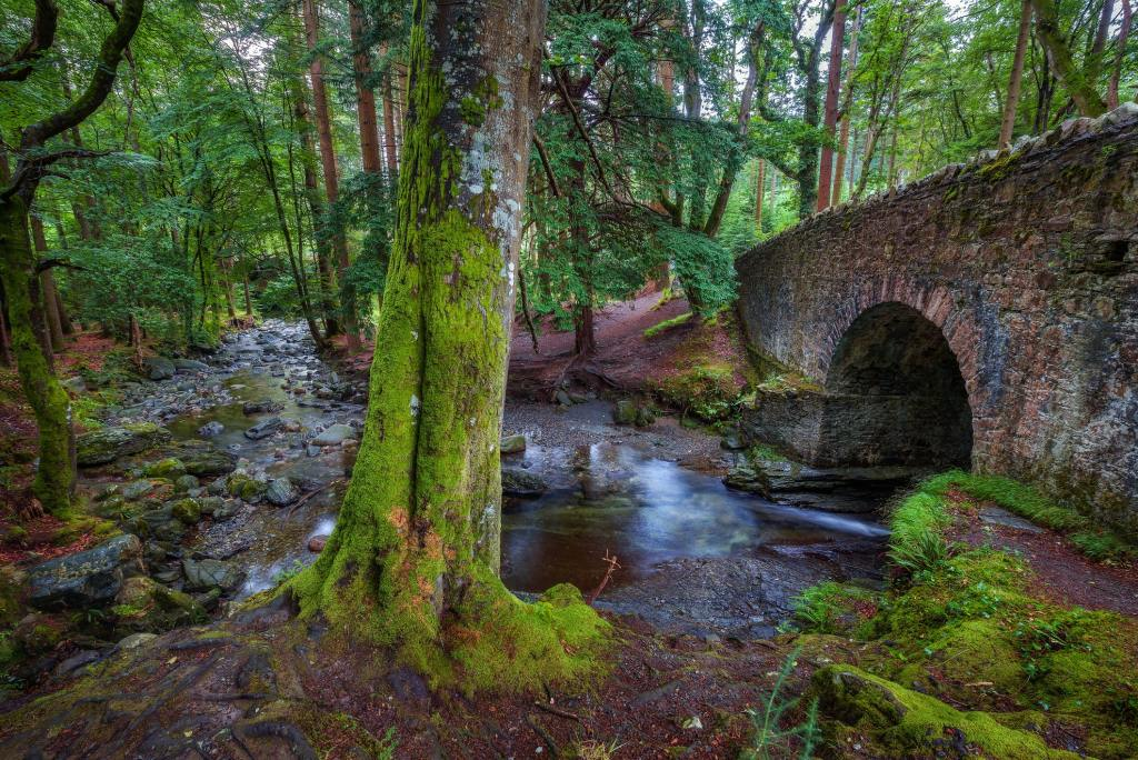 The Haunted Forest aka Tollymore Forest Park, County Down
