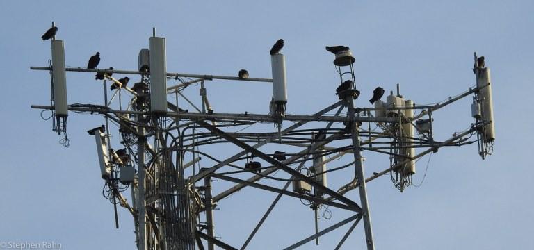 MFA CellTower
