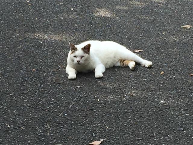 201607-cat-002