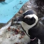 カピパラ露天風呂で有名な伊豆シャボテン動物公園は超近距離で動物を見れたり触れたりするのでオススメです。