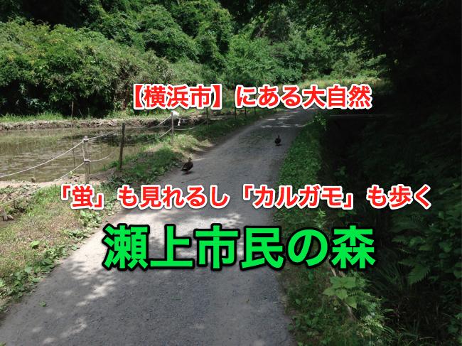 yokohama_segami_01