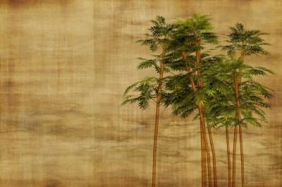 Bambus by Geralt (pixabay)