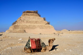 Camel with the step pyramid of Djoser in the background at Saqqara, Egypt