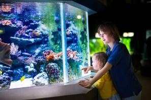 Kids at the aquarium ashore