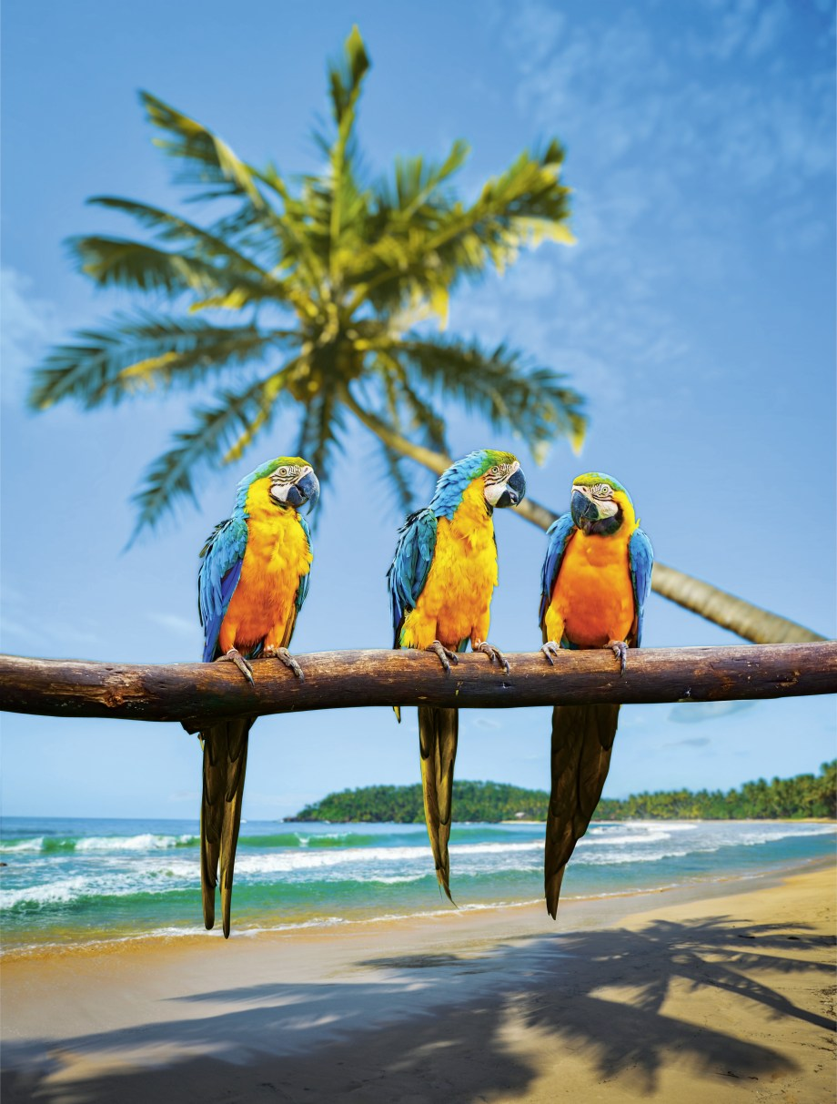 Captivating Caribbean Shore Excursions