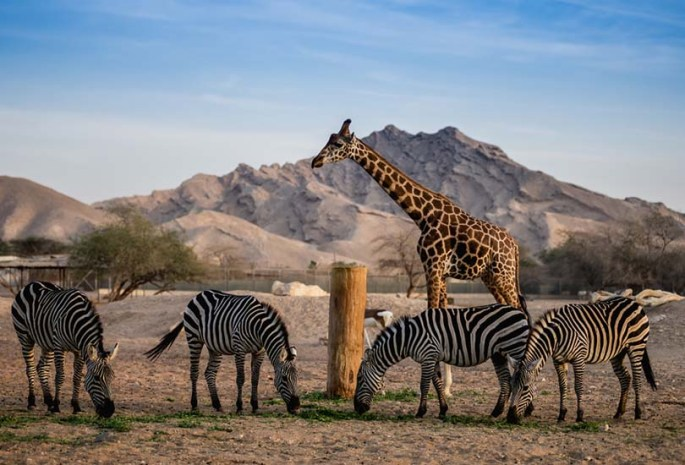 A Trip to Emirates Park Zoo