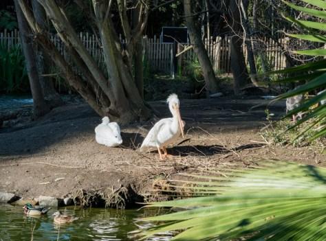 the animals in Sacramento