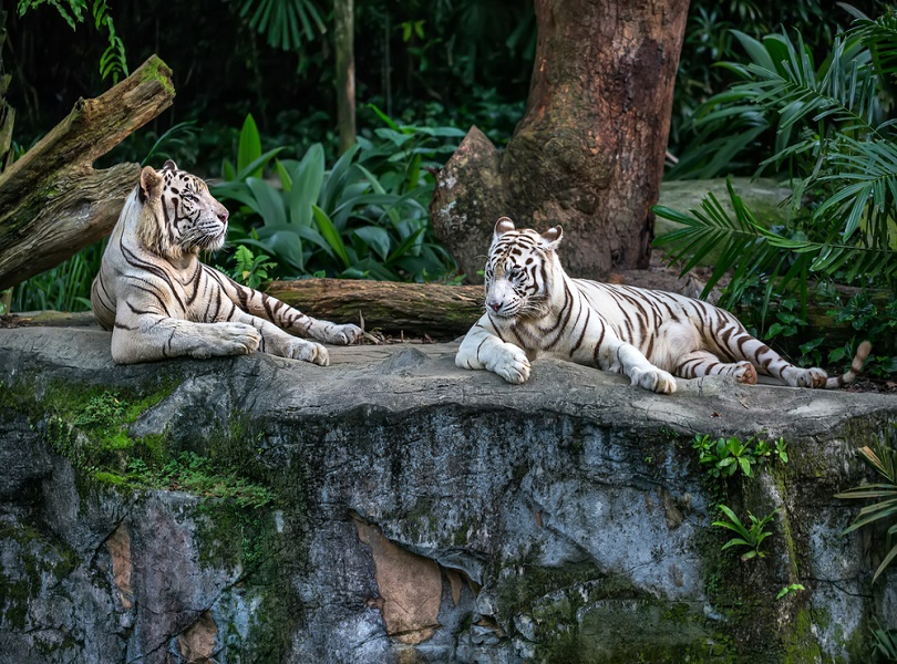 A VISIT TO SINGAPORE ZOO
