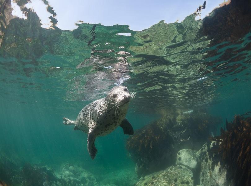 SPOTTING SEALS
