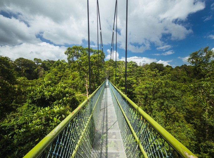 THRILLING TREE-TOP WALK AT MACRITCHIE RESERVOIR