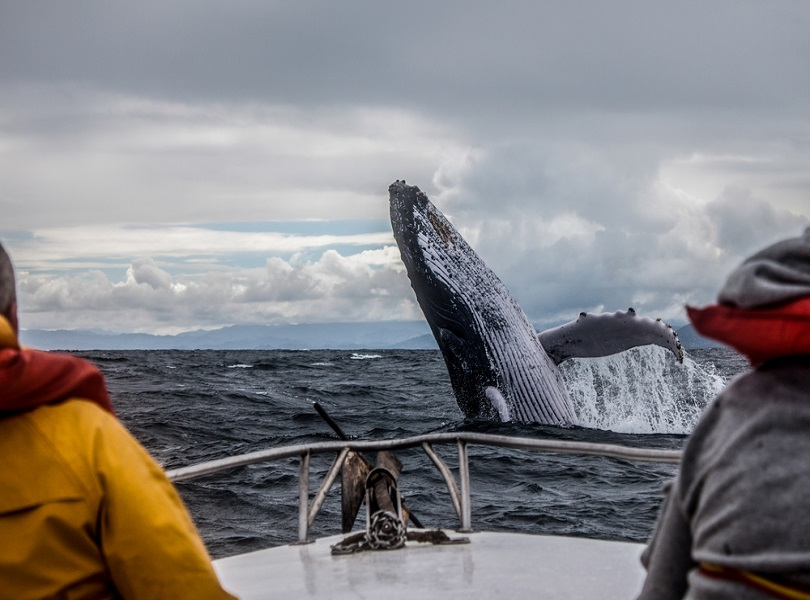 WATCHING WHALE