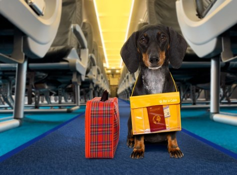popular pet-friendly airlines