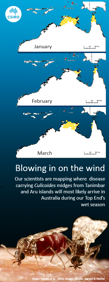 Infographic including maps detailing the dispersal of culicoides midges blowing into northern Australia