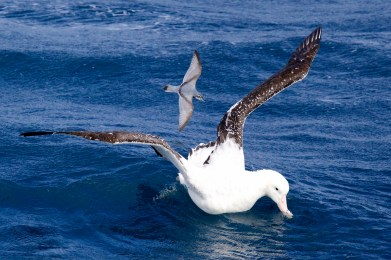 Bird life in the Southern Ocean (image MNF+Pete Harmsen) LR
