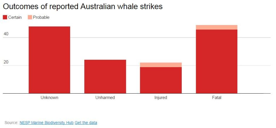 outcomes-of-reported-australian-whale-strikes