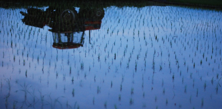 Rice paddies are one of the major sources of methane in agriculture. Amir Jina/Flickr, CC BY-NC-ND