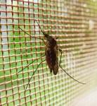 mosquito-1318443083oGd