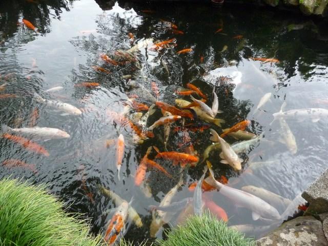 Identificar uma doença no peixe