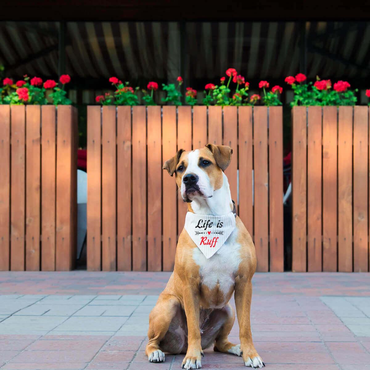 Dog_Bandana-2