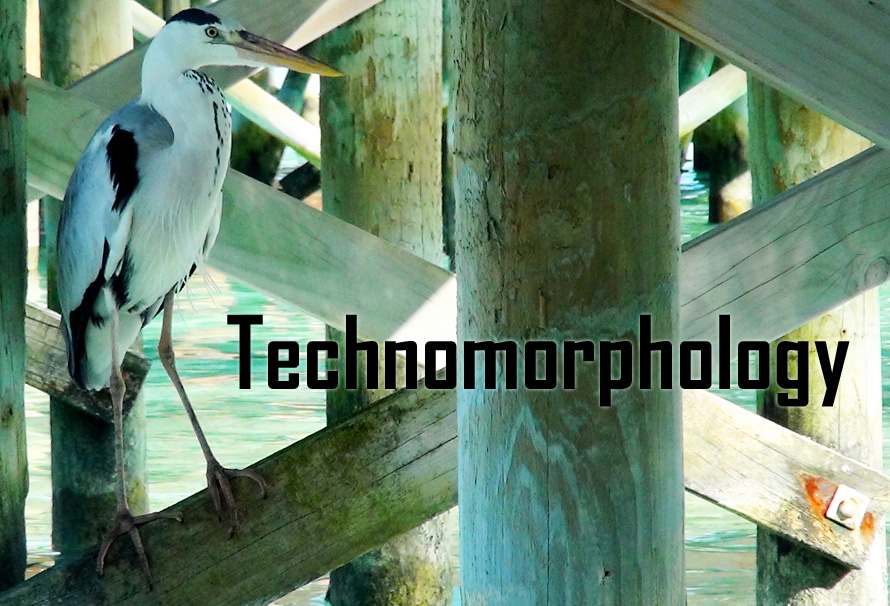Technomorphology header