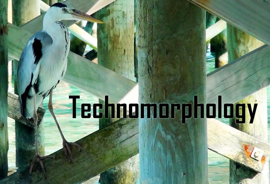 Technomorphology header