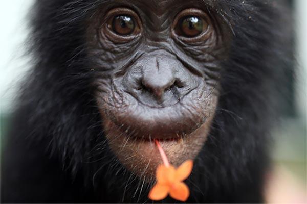 bonobo-fleur