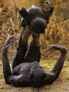 Maman bonobo avec son enfant