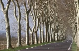 L'arbre et la route : comment vivre ensemble ?