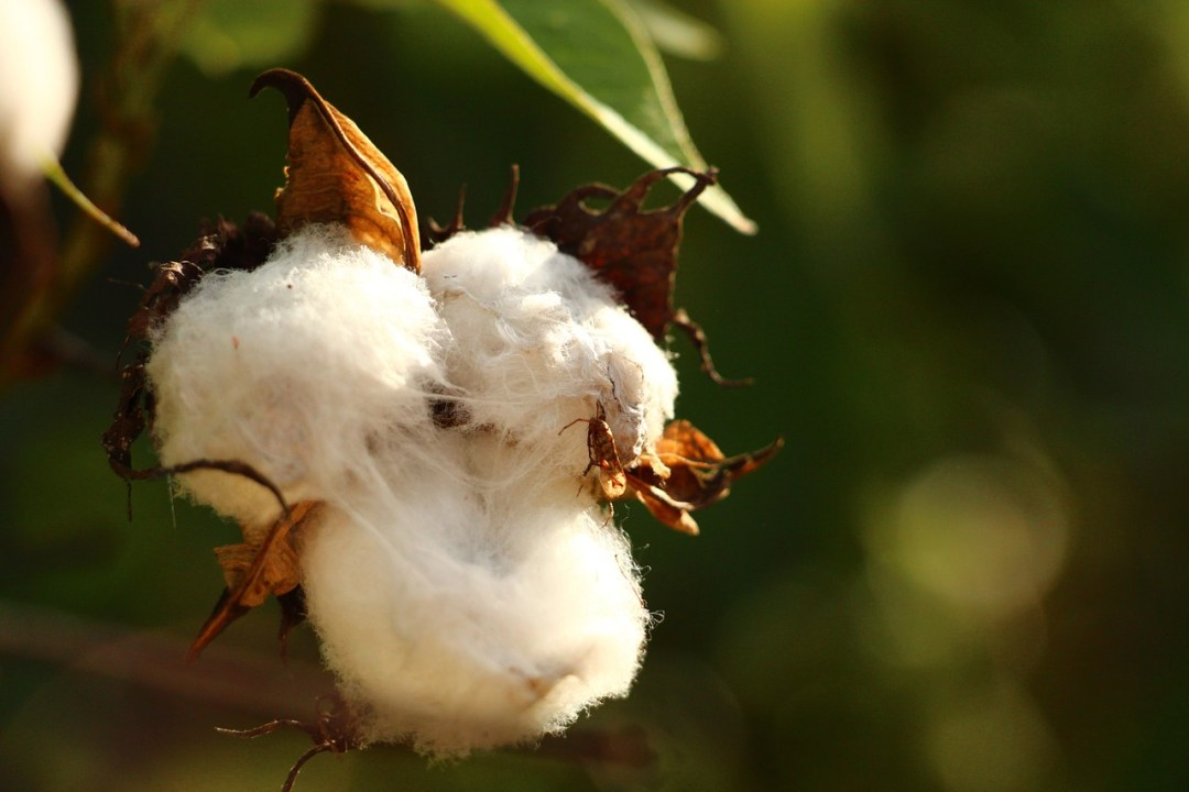 bavlnene plienky