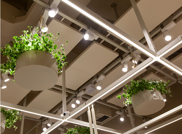 Foto das luzes de led, o detalhe da iluminação e das folhagens