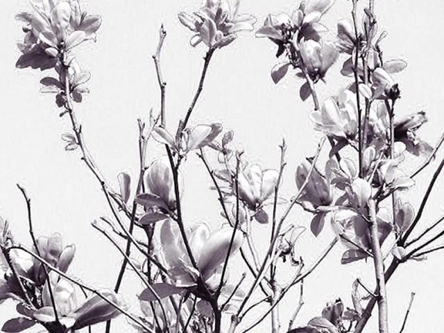 """Dantebus - """"Il mmio canto silenzioso"""" Nilodan"""