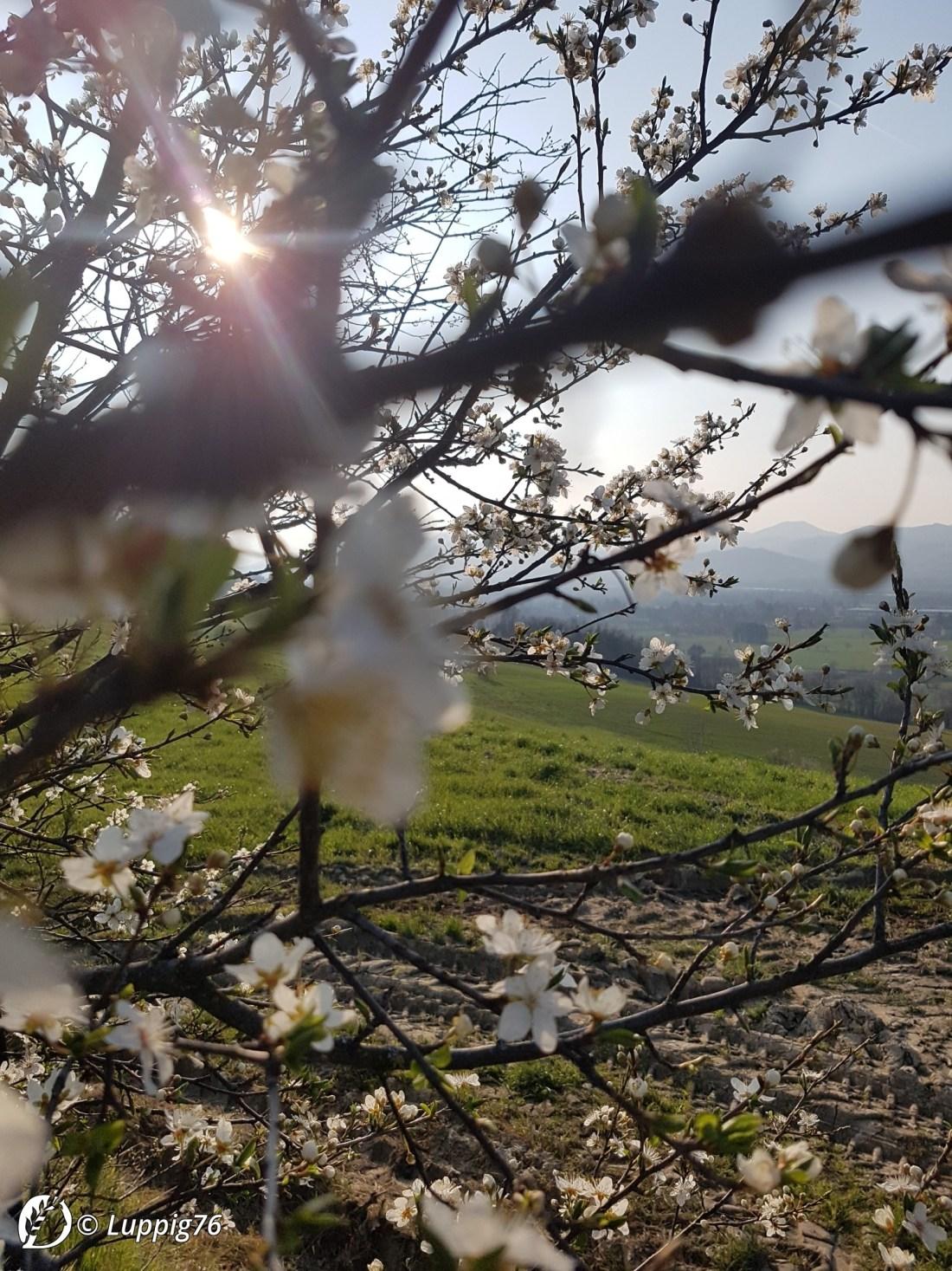 "Dantebus - ""Felicità fatta a natura"" Luppig76"
