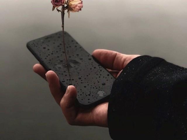 Dantebus - Bruno D'Alessandro - Flower