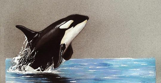 Dantebus - Kaila Okami - Killer Whale