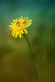 fleur-d750