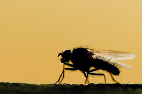 mouche-contre-jour