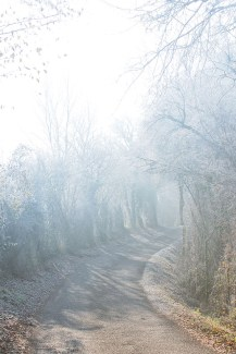 brume-d-automne