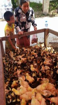 Chicks and ducklings in the market