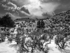 Sage, Snow, Sky