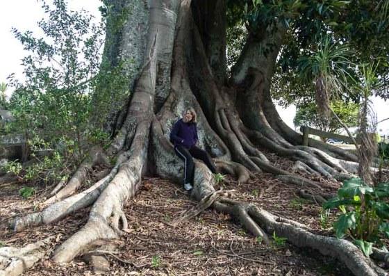 Wyn and Morton Bay Fig tree