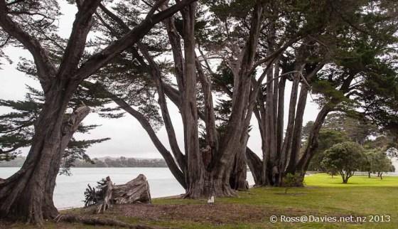 Scott Point Mahurangi Regional Park Auckland