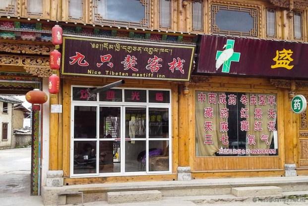 Nice Tibetan Mastiff Inn Shangrila