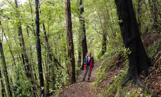 Walk in the beech forest