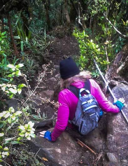 Scrambling down the Mt Te Aroha track