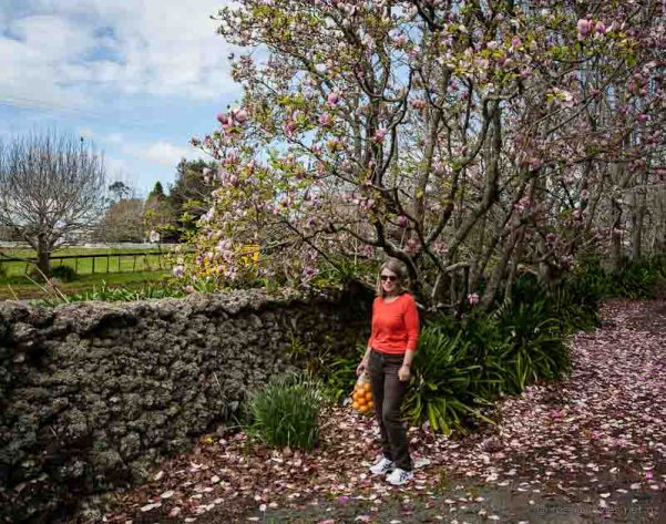 Wyn at Glenbervie; stone walls, magnolias and bags of oranges