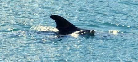 Dolphins Elaine Bay