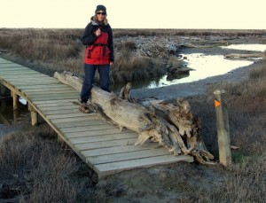Driftwood on boardwalk
