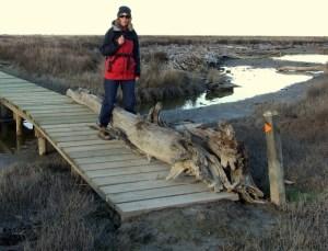 Driftwood on boardwalk