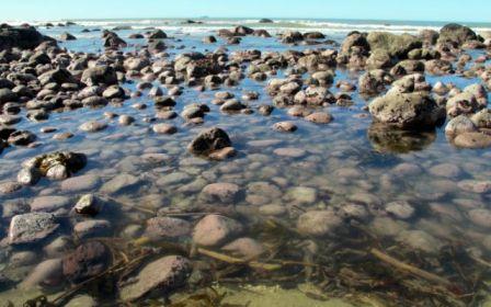 Newdicks Beach - Maketu