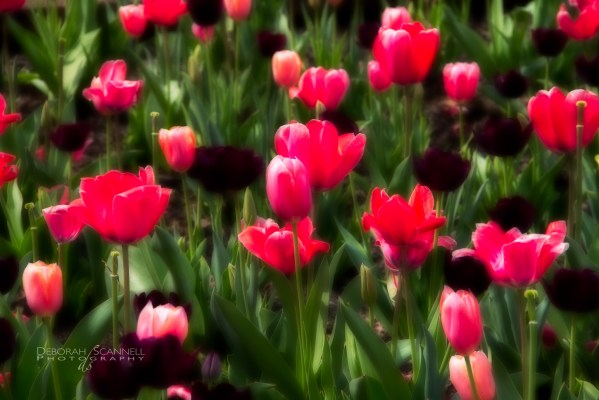 Biltmore Estate spring-3261-Edit